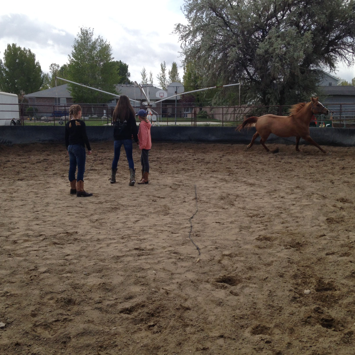 Lunging in the round pen!